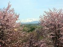 春の上富良野町イメージ